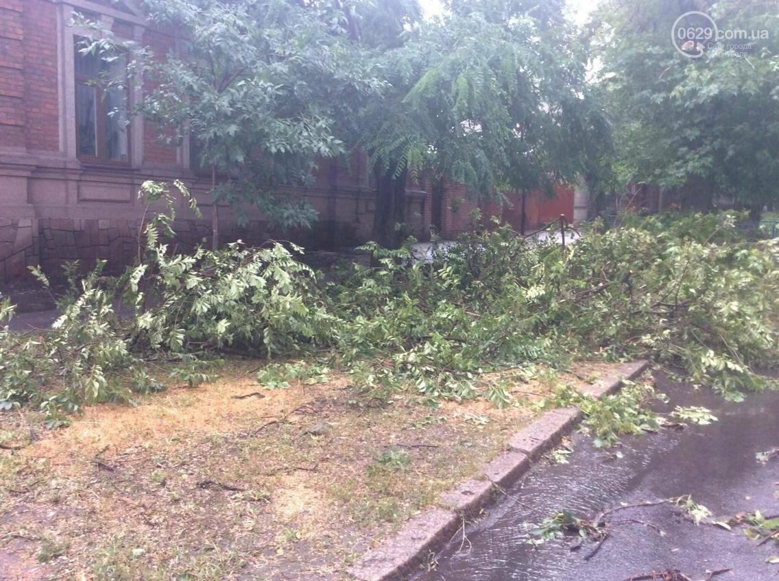 В Мариуполе ураган валил деревья на автомобили, остановки и проезжую часть(ФОТО, ВИДЕО), фото-4