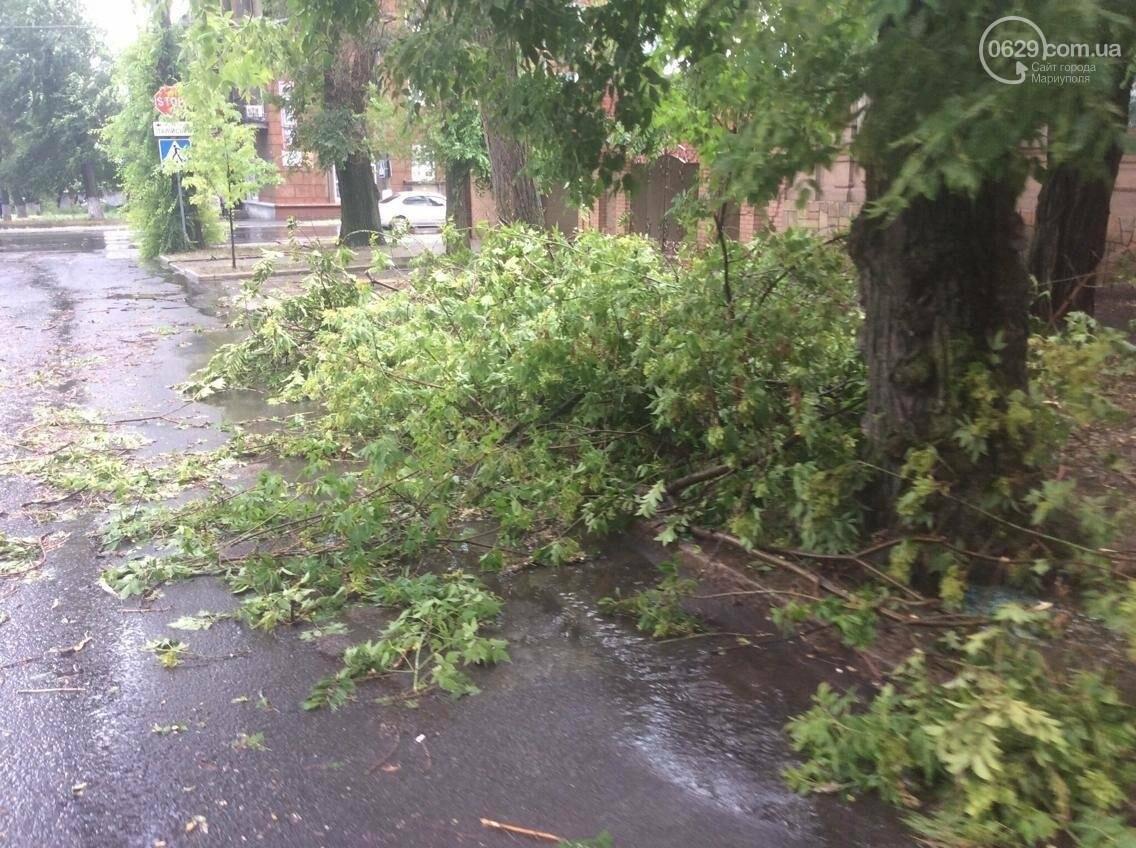 В Мариуполе ураган валил деревья на автомобили, остановки и проезжую часть(ФОТО, ВИДЕО), фото-5