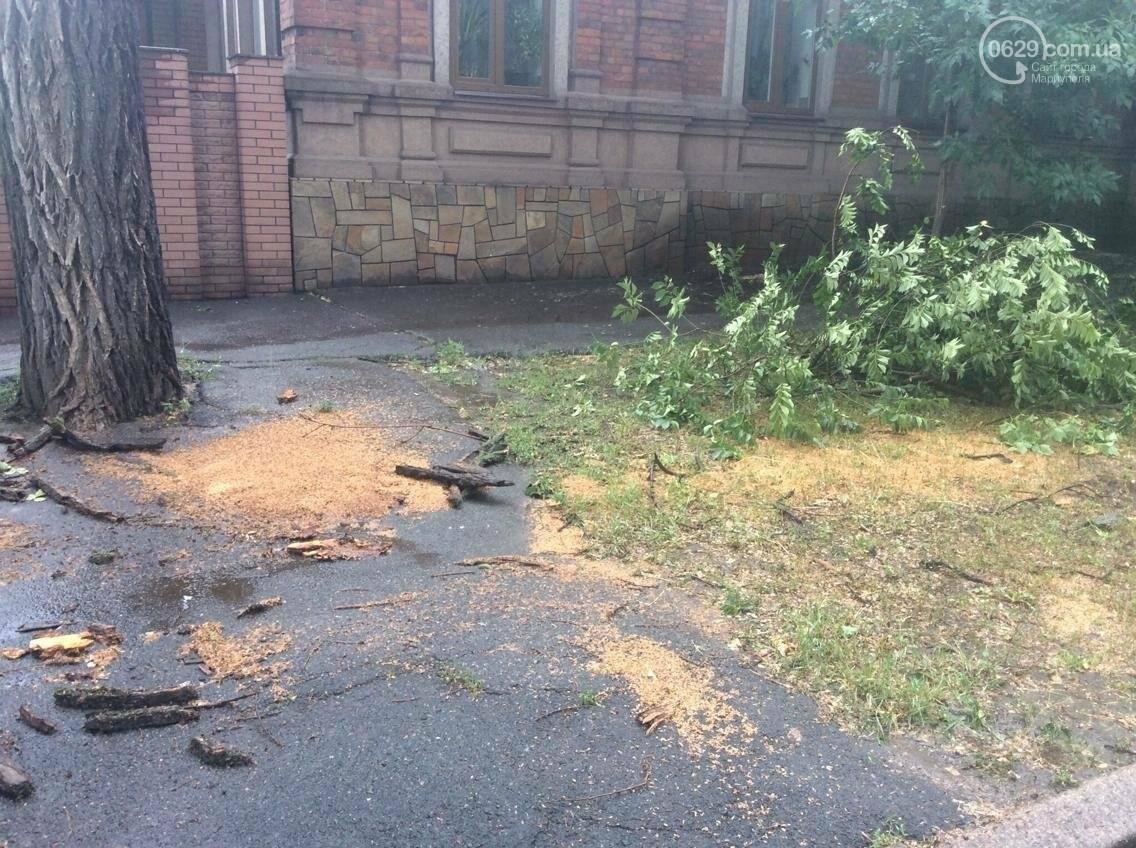 В Мариуполе ураган валил деревья на автомобили, остановки и проезжую часть(ФОТО, ВИДЕО), фото-2