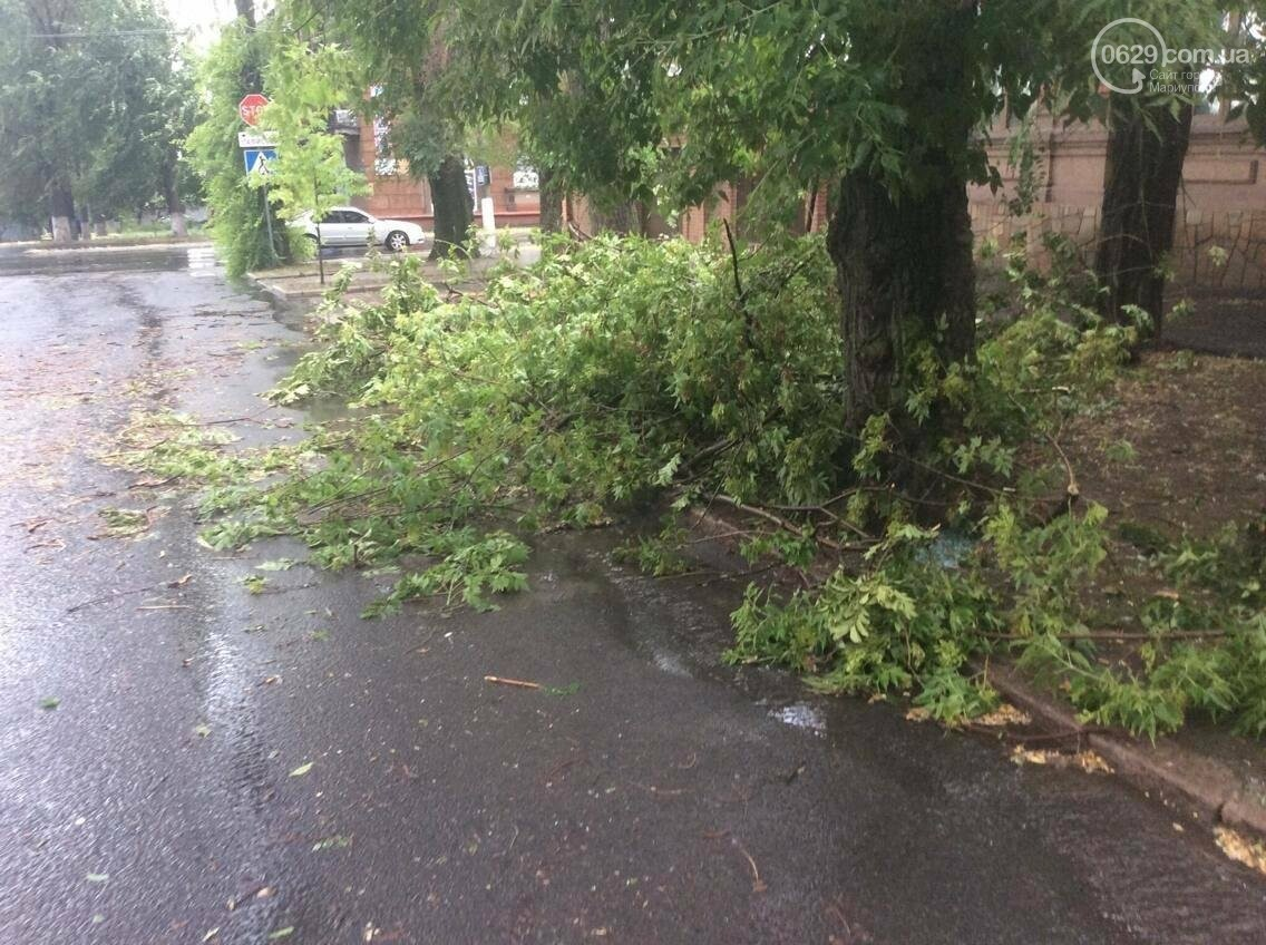 В Мариуполе ураган валил деревья на автомобили, остановки и проезжую часть(ФОТО, ВИДЕО), фото-1