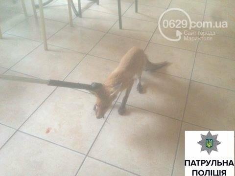 Мариупольские копы поймали бешеную лису (ФОТО), фото-1
