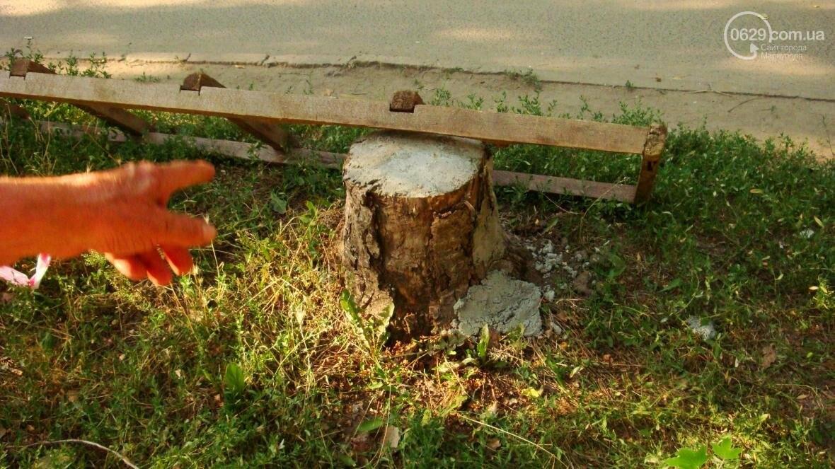 В центре Мариуполя спиливают живые деревья (ФОТО), фото-2