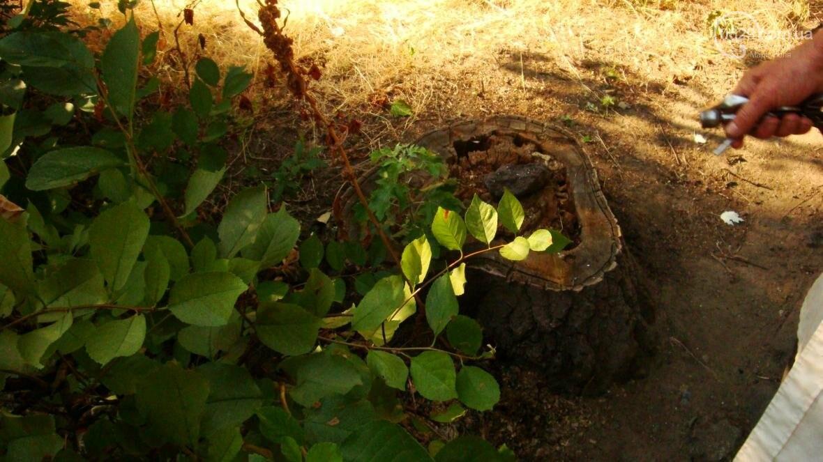 В центре Мариуполя спиливают живые деревья (ФОТО), фото-4