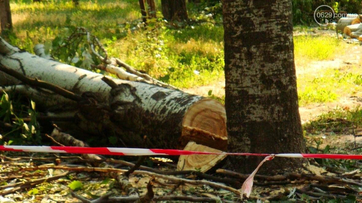 В центре Мариуполя спиливают живые деревья (ФОТО), фото-3