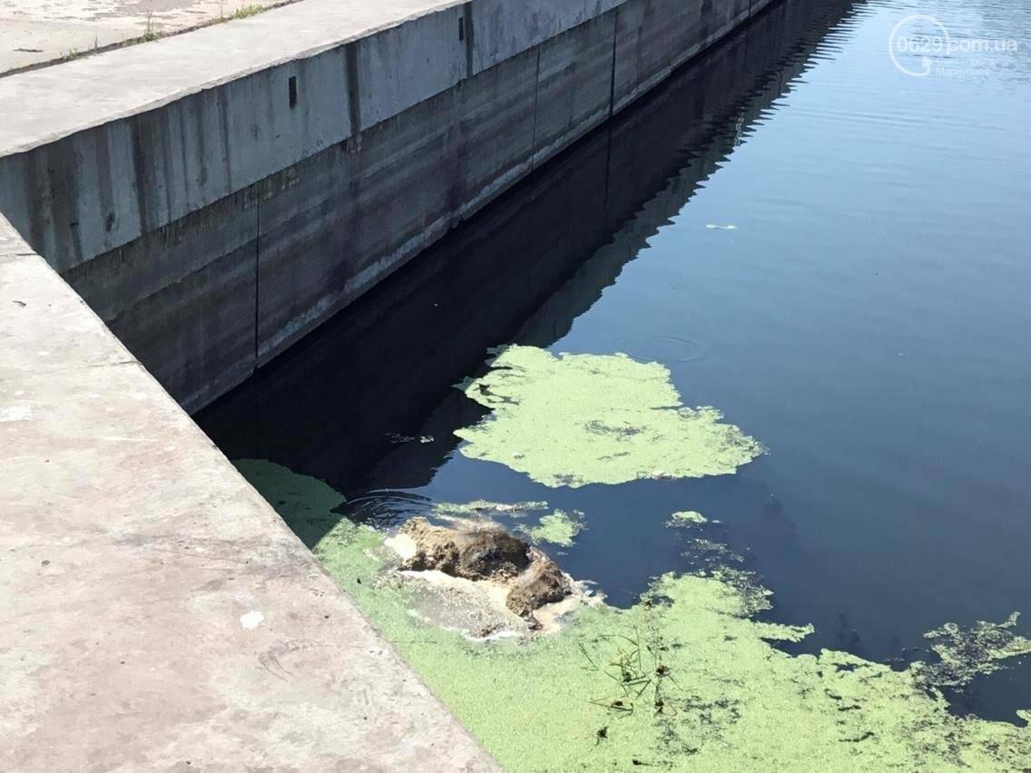 В Мариуполе  в реке уже почти неделю плавает труп животного (ФОТО, ВИДЕО), фото-1
