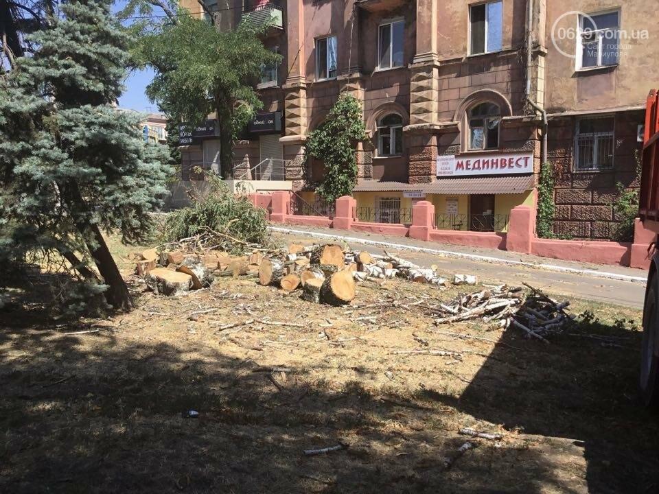 В центре Мариуполя спилили березу. Жители против (ФОТО), фото-3