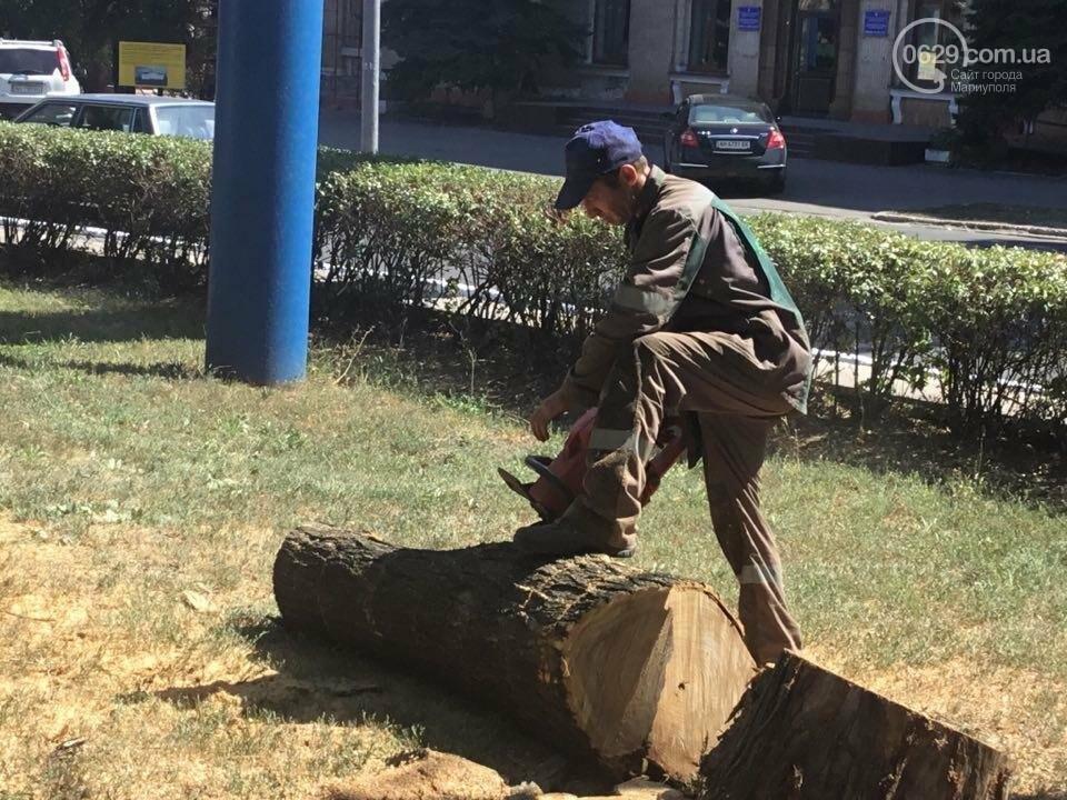 В центре Мариуполя спилили березу. Жители против (ФОТО), фото-4