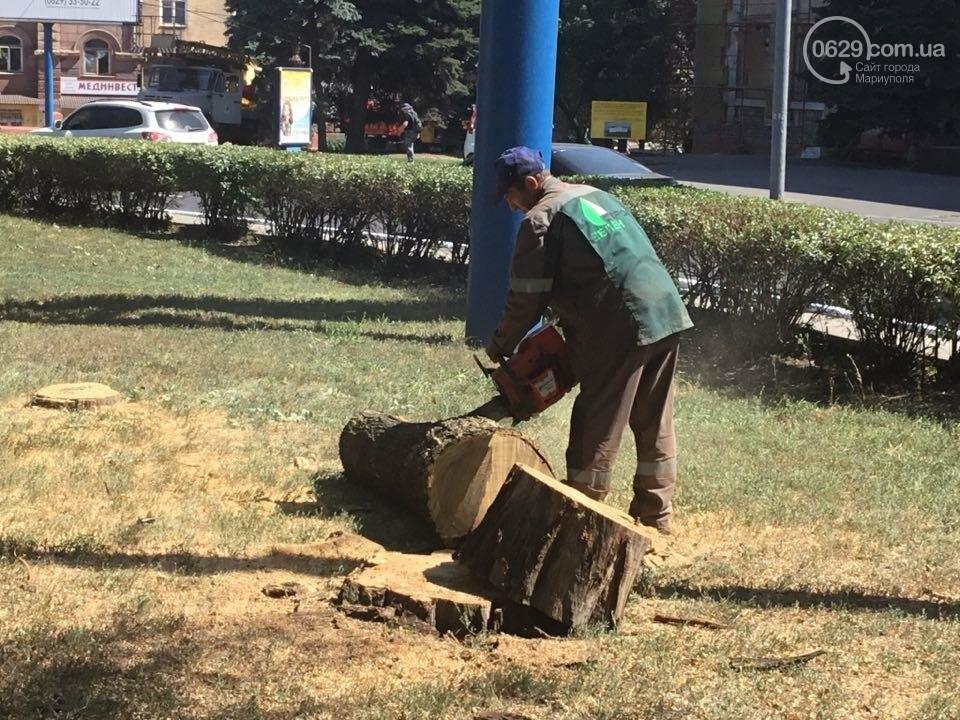 В центре Мариуполя спилили березу. Жители против (ФОТО), фото-8