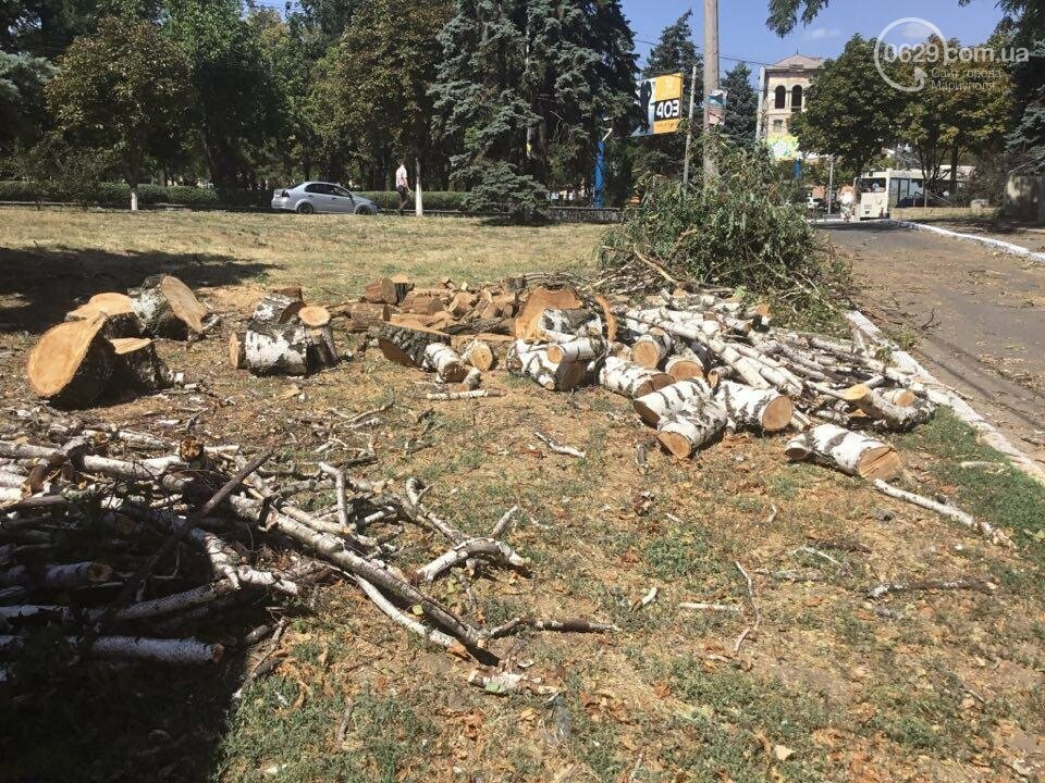 В центре Мариуполя спилили березу. Жители против (ФОТО), фото-13