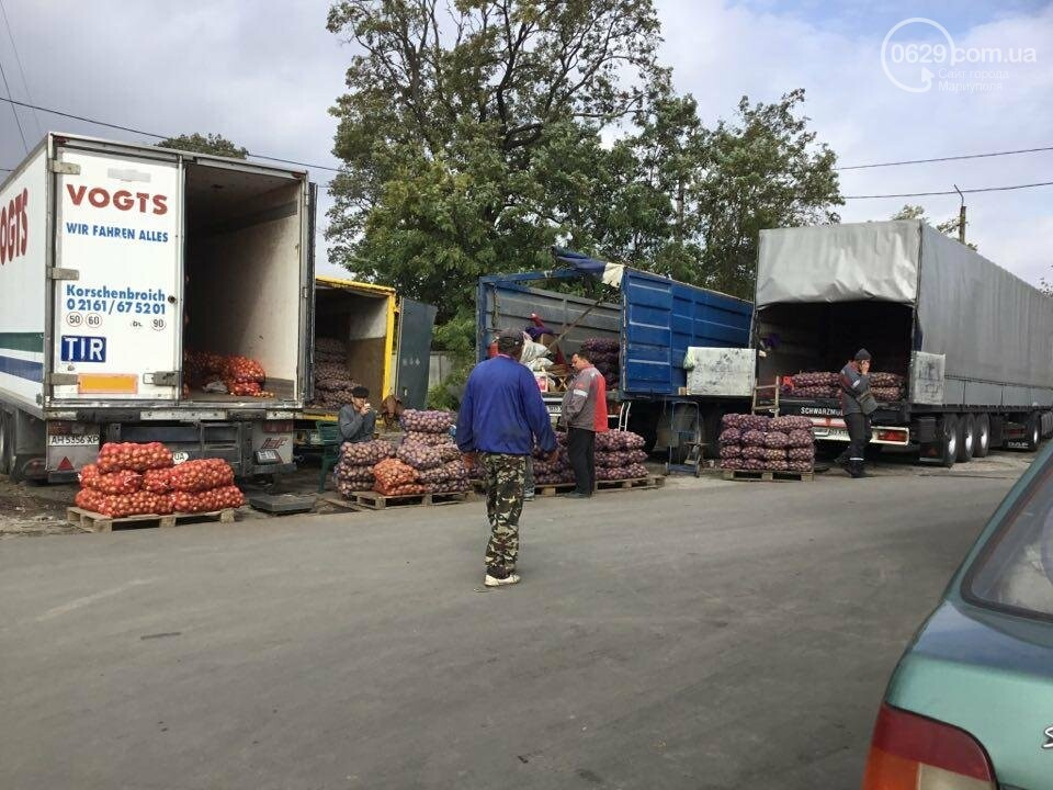 Осторожно, картофель! Стало известно, где в Мариуполе продают овощи без нитратов, фото-5