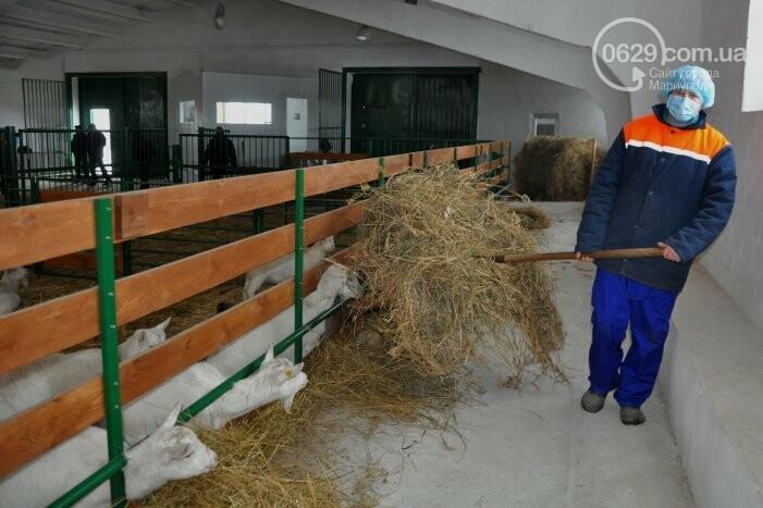 Бывший шахтер-переселенец получил грант и открыл козью ферму в Боевом, фото-6