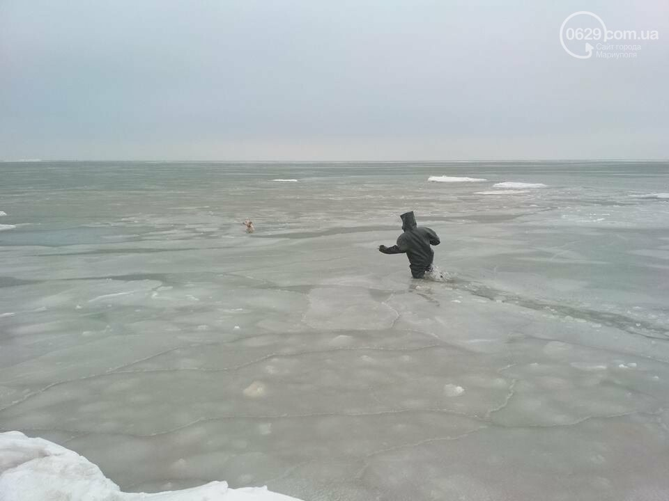 Мариупольские спасатели достали из ледяной воды бездомную собаку (ФОТО), фото-1