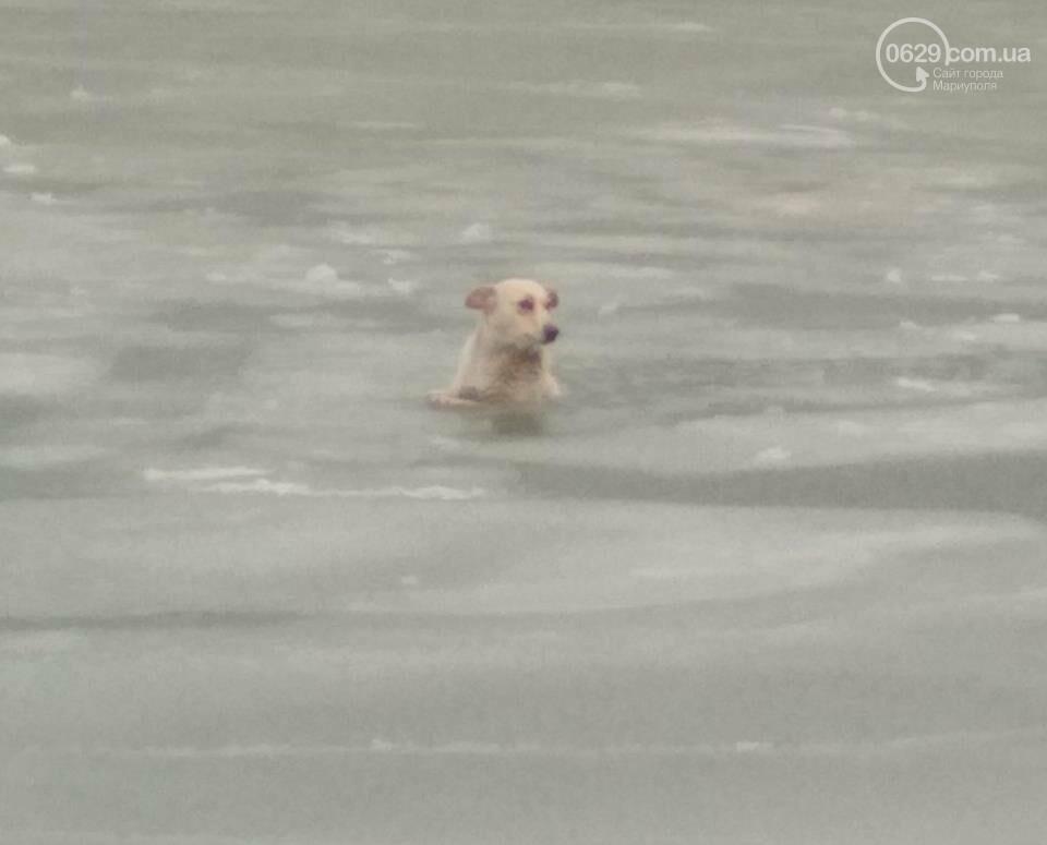 Мариупольские спасатели достали из ледяной воды бездомную собаку (ФОТО), фото-2