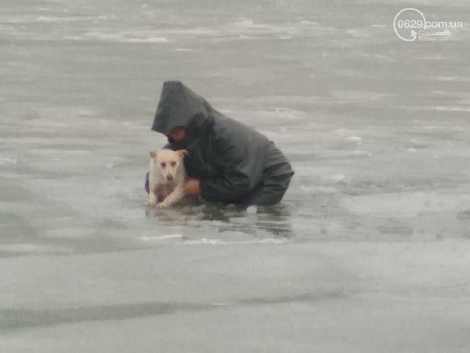 Мариупольские спасатели достали из ледяной воды бездомную собаку (ФОТО), фото-3