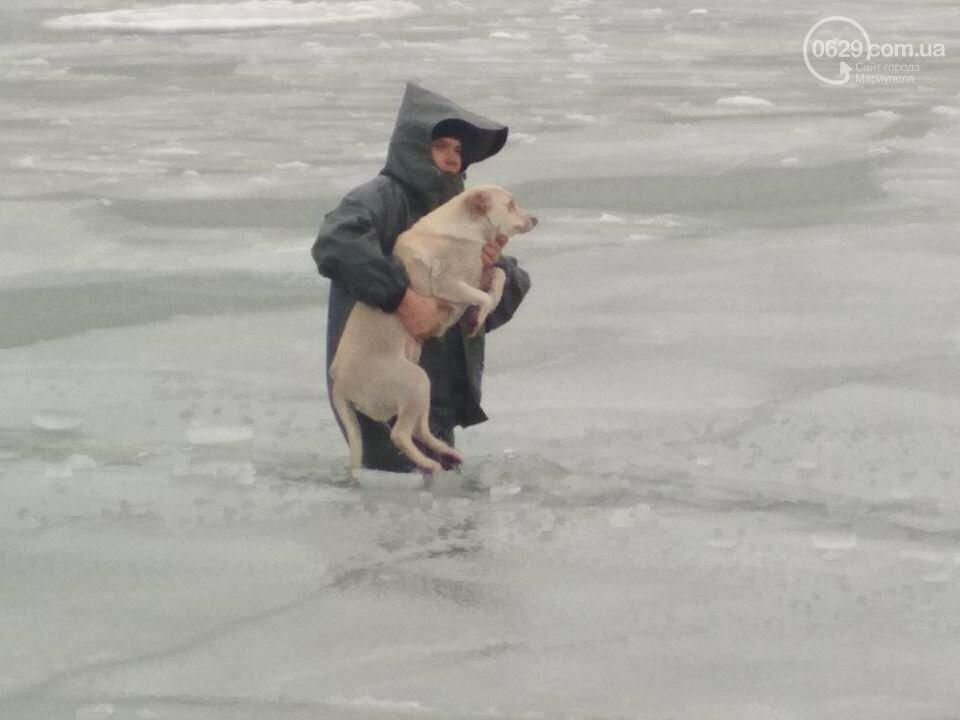 Мариупольские спасатели достали из ледяной воды бездомную собаку (ФОТО), фото-4