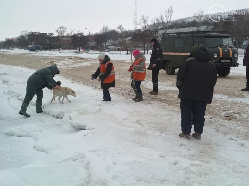 Мариупольские спасатели достали из ледяной воды бездомную собаку (ФОТО), фото-5