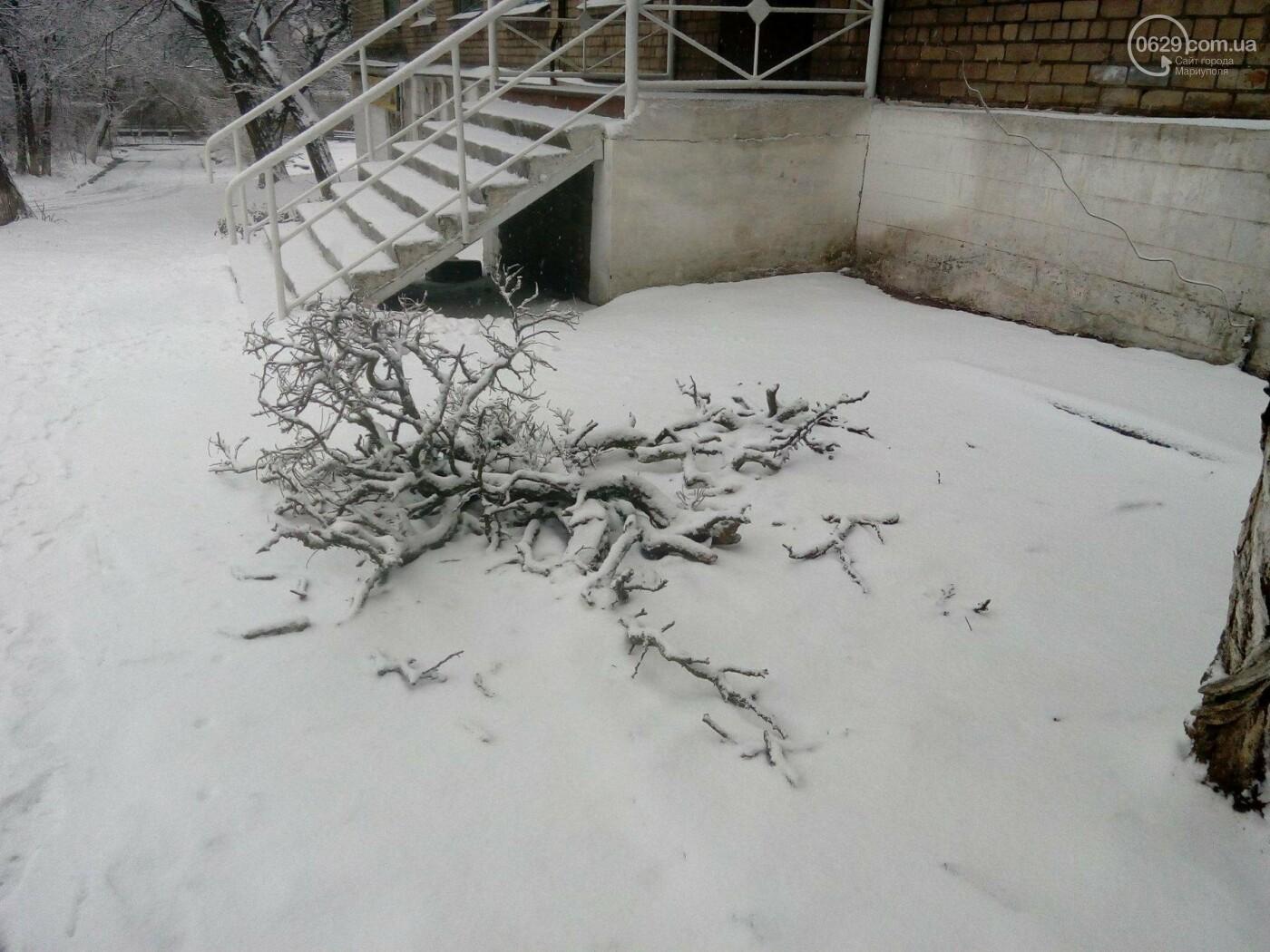 Ледяной плен свалил на дорогу десятки деревьев и обесточил тысячи домов (ФОТО+ВИДЕО), фото-8