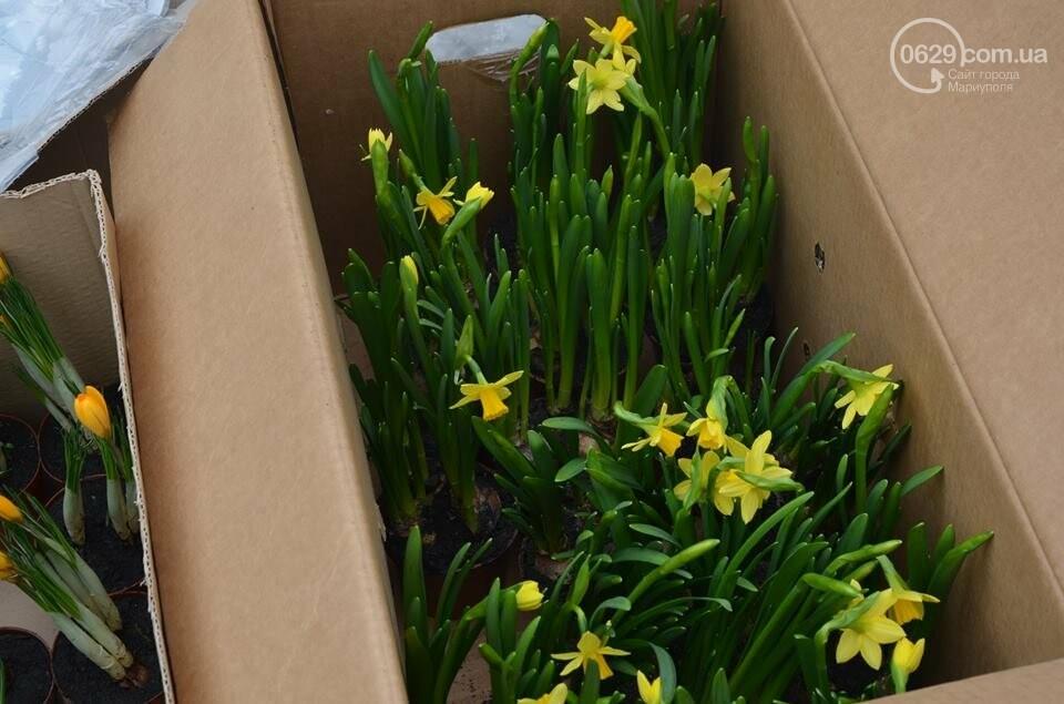 Розы и тюльпаны cтали самым ходовым товаром в Мариуполе (ФОТО+ВИДЕО), фото-12