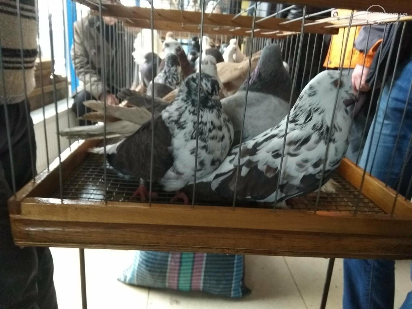 В Мариуполе показали редких голубей (ФОТОРЕПОРТАЖ), фото-1