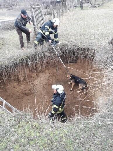 В Мариуполе спасли собаку, провалившуюся в сливную яму (ФОТО), фото-4