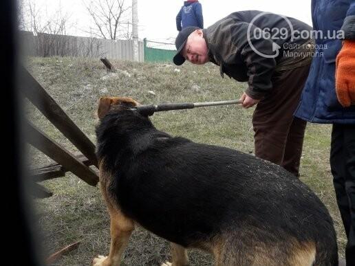 В Мариуполе спасли собаку, провалившуюся в сливную яму (ФОТО), фото-2