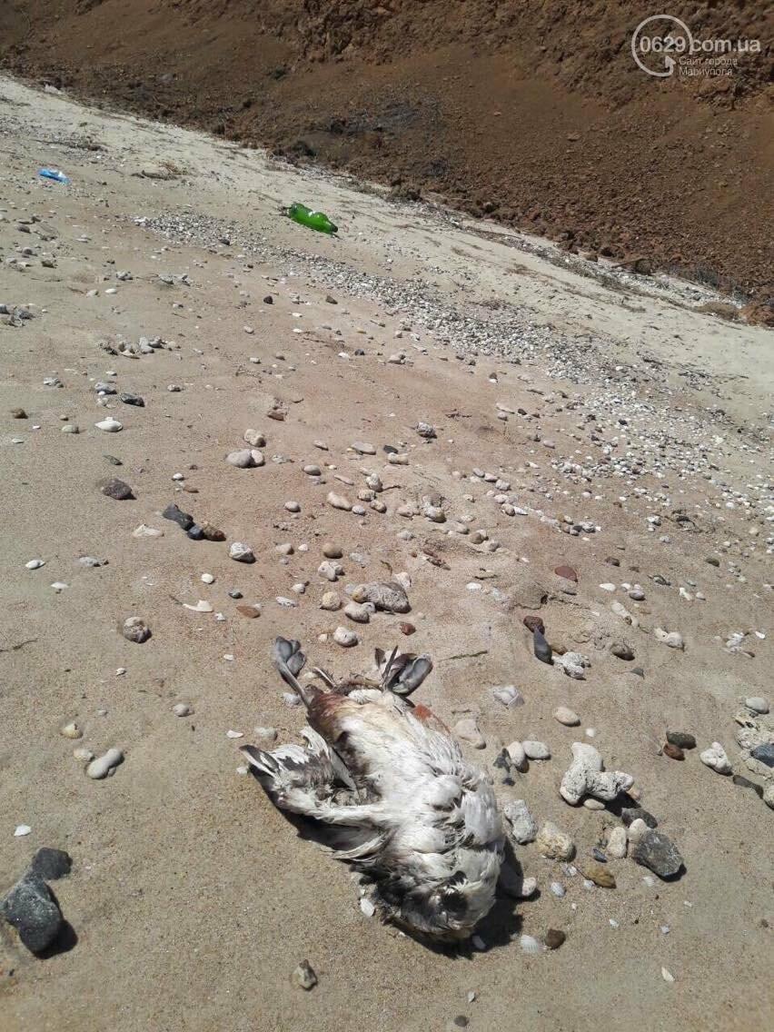 На Песчаном пляже в Мариуполе лежат десятки мертвых птиц (Фотофакт, ВИДЕО), фото-7
