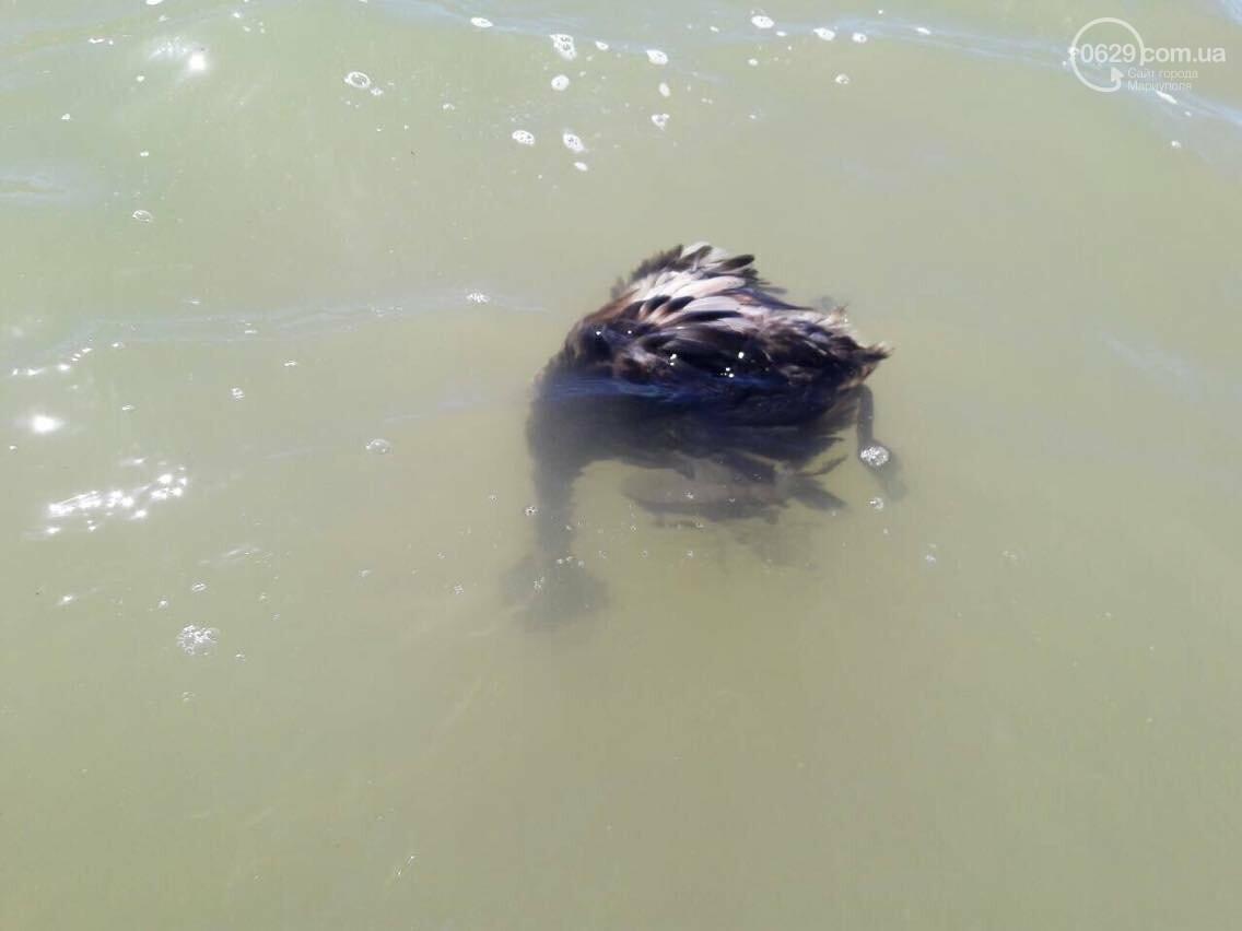 На Песчаном пляже в Мариуполе лежат десятки мертвых птиц (Фотофакт, ВИДЕО), фото-3
