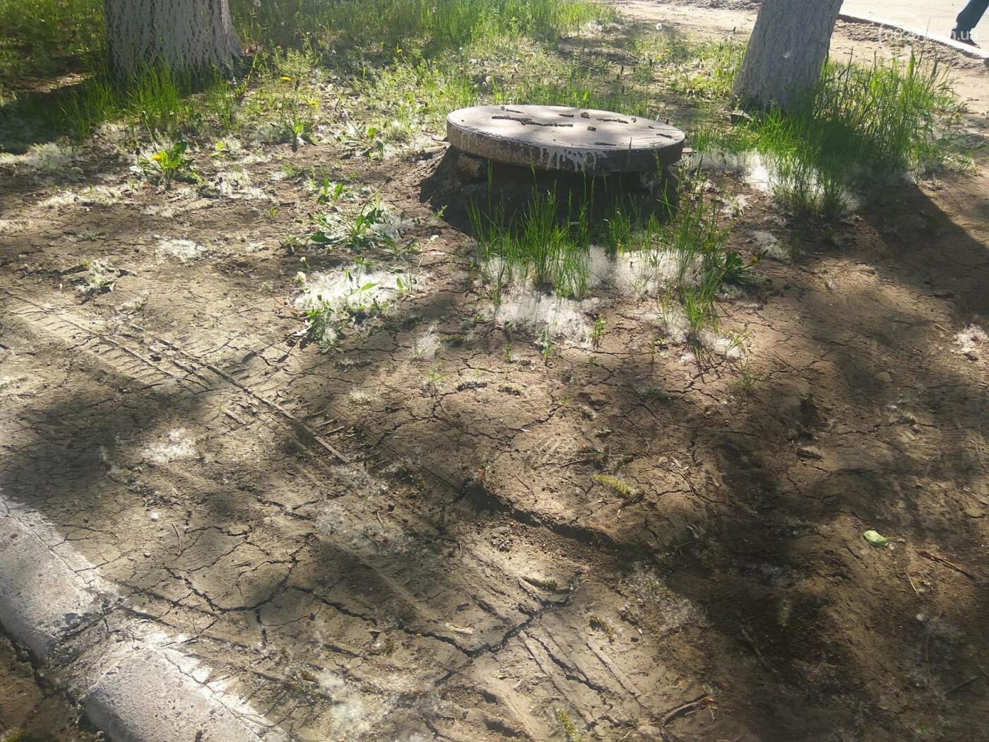 В Мариуполе раньше времени появился тополиный пух (Фотофакт), фото-9