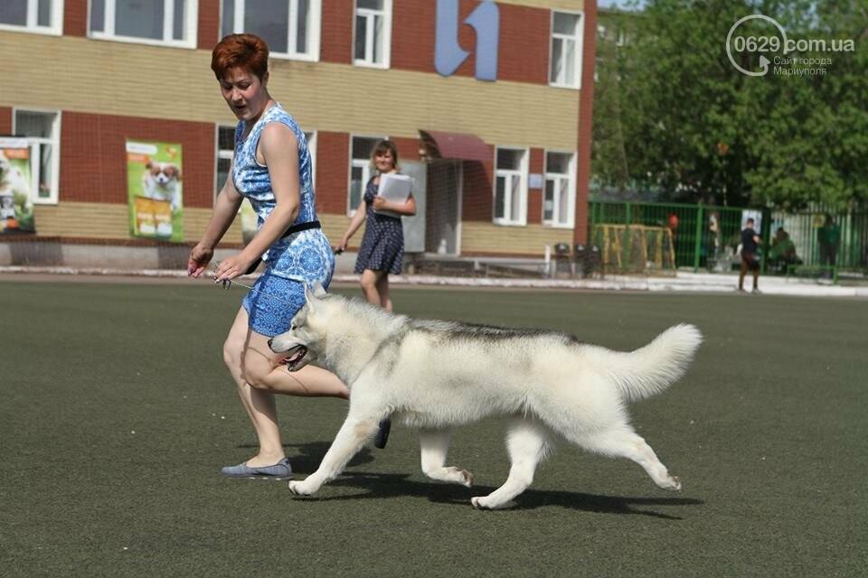 В Мариуполе лучшими собаками выставки стали немецкая овчарка и хаски (ФОТОРЕПОРТАЖ), фото-2