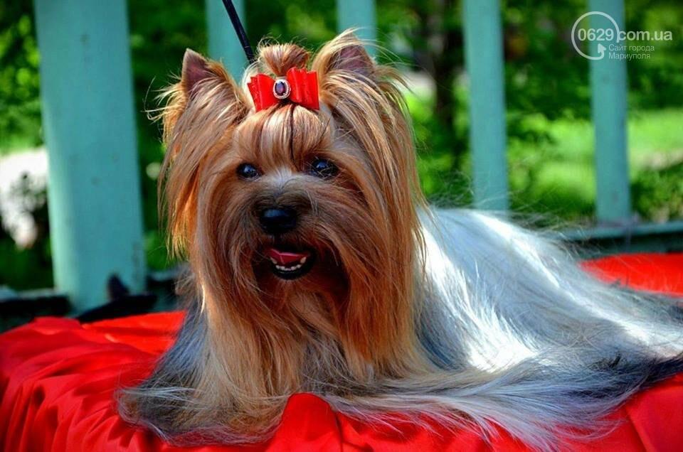 В Мариуполе лучшими собаками выставки стали немецкая овчарка и хаски (ФОТОРЕПОРТАЖ), фото-3