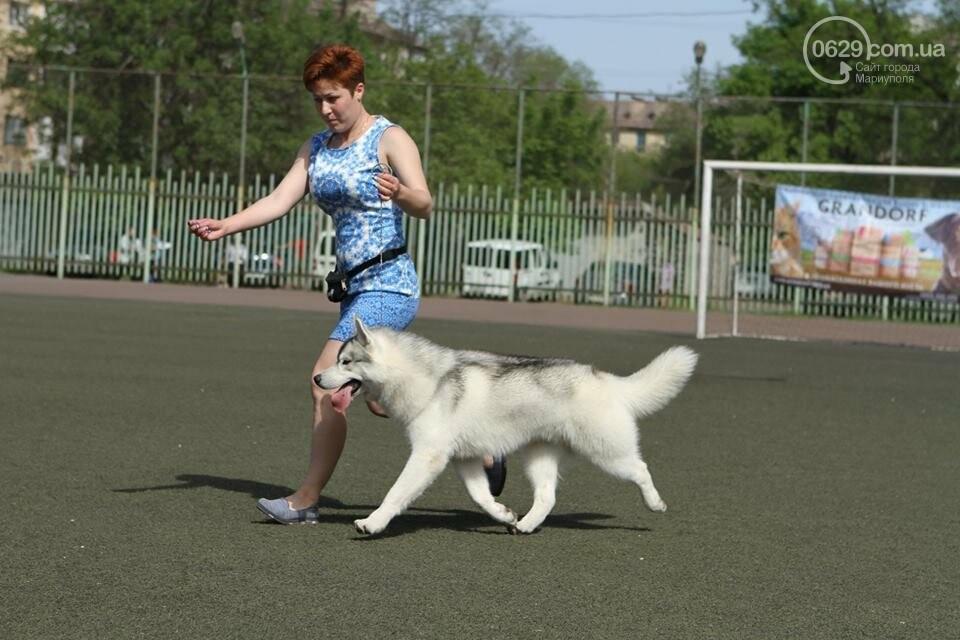 В Мариуполе лучшими собаками выставки стали немецкая овчарка и хаски (ФОТОРЕПОРТАЖ), фото-5