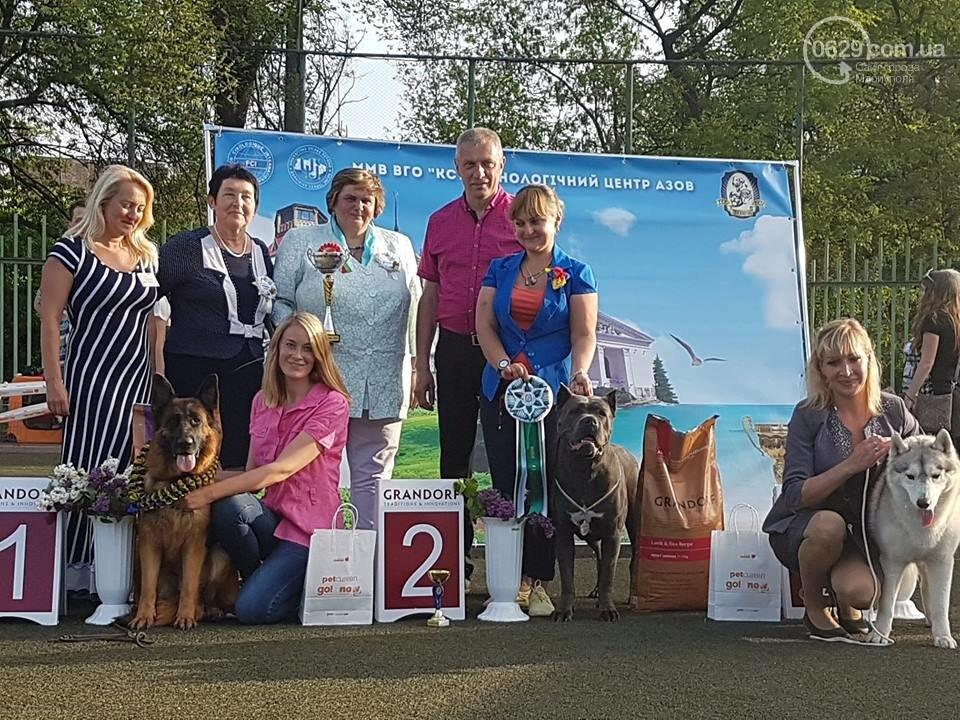 В Мариуполе лучшими собаками выставки стали немецкая овчарка и хаски (ФОТОРЕПОРТАЖ), фото-14