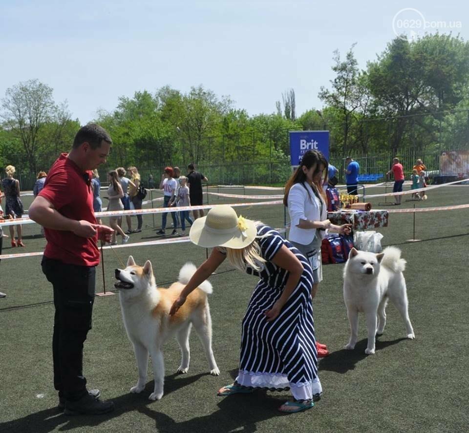 В Мариуполе лучшими собаками выставки стали немецкая овчарка и хаски (ФОТОРЕПОРТАЖ), фото-11