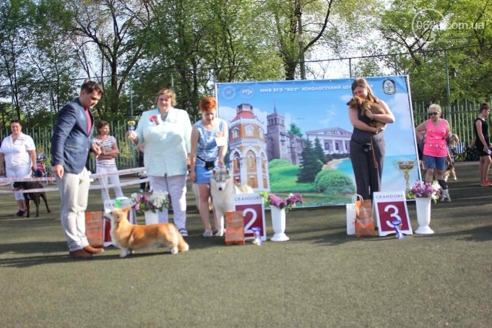 В Мариуполе лучшими собаками выставки стали немецкая овчарка и хаски (ФОТОРЕПОРТАЖ), фото-10