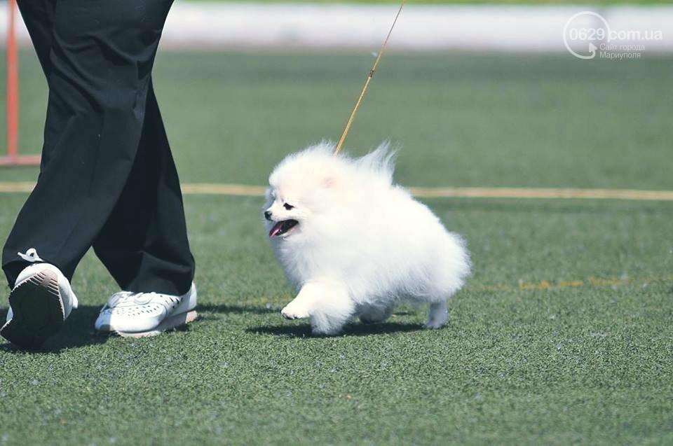 В Мариуполе лучшими собаками выставки стали немецкая овчарка и хаски (ФОТОРЕПОРТАЖ), фото-13