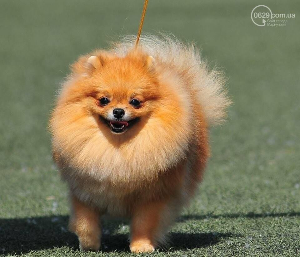 В Мариуполе лучшими собаками выставки стали немецкая овчарка и хаски (ФОТОРЕПОРТАЖ), фото-12