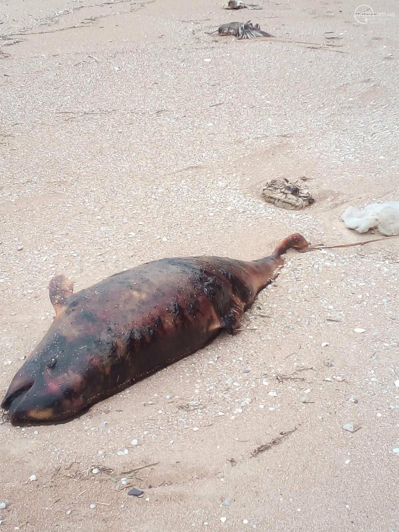 Под Мариуполем обнаружили мертвого дельфина (ФОТО), фото-2