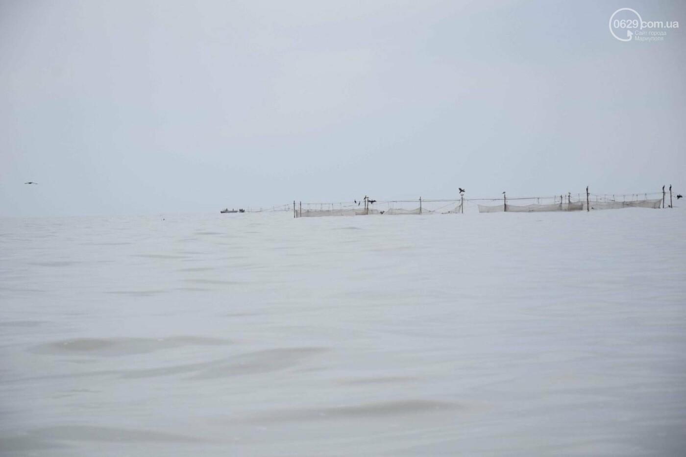 Массовая гибель морских птиц на Азовском побережье: версии, - ФОТО, фото-4