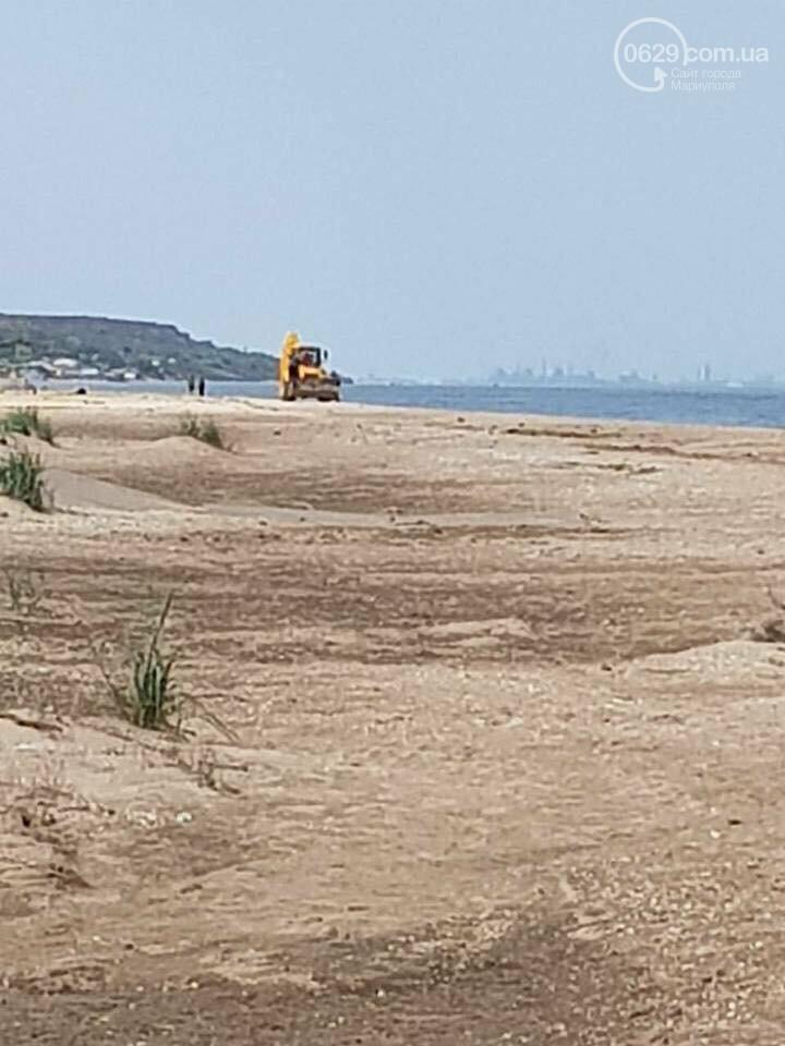 Массовая гибель морских птиц на Азовском побережье: версии, - ФОТО, фото-2