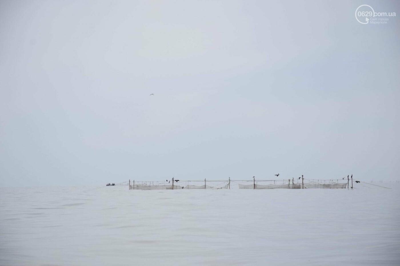 Массовая гибель морских птиц на Азовском побережье: версии, - ФОТО, фото-3