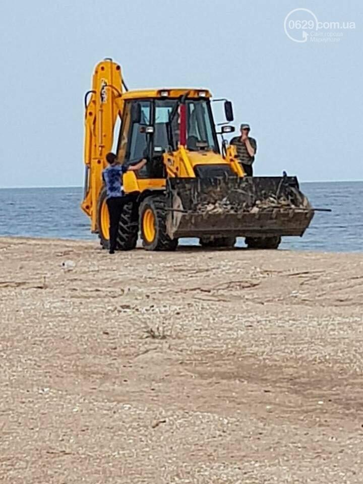 Массовая гибель морских птиц на Азовском побережье: версии, - ФОТО, фото-1