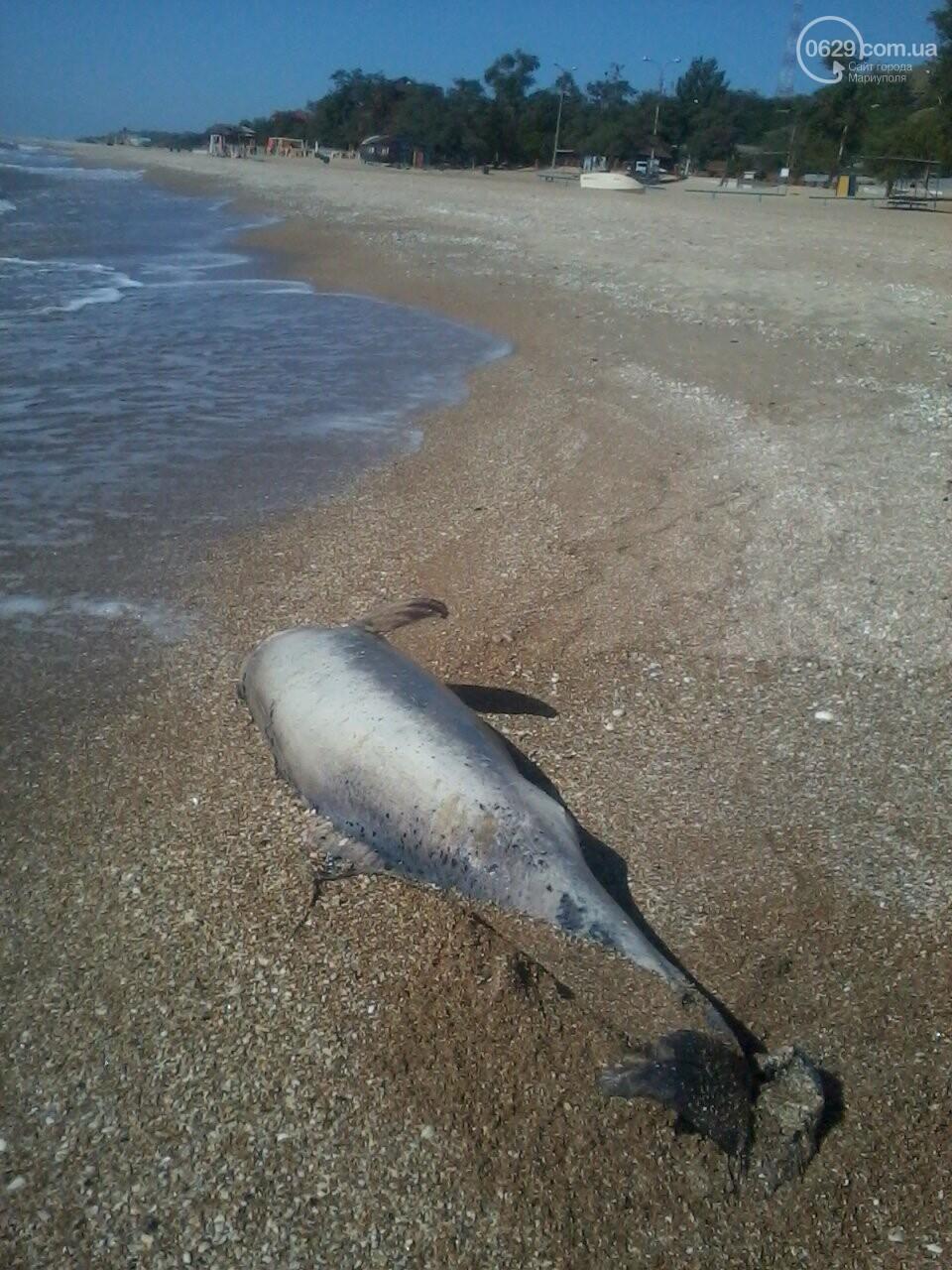 На берег Песчанки выбросило мертвого дельфина, - ФОТОФАКТ, фото-2