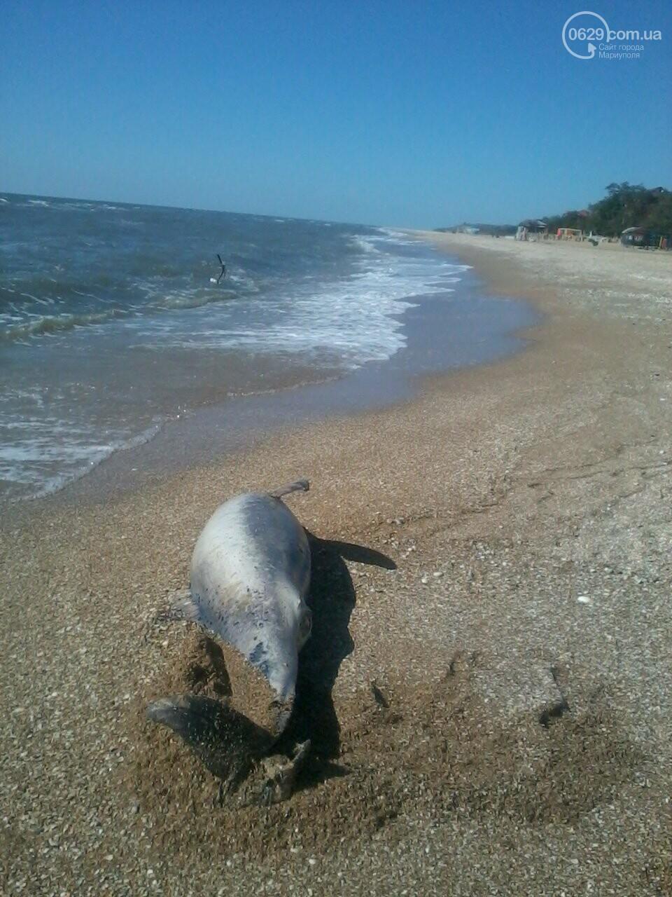 На берег Песчанки выбросило мертвого дельфина, - ФОТОФАКТ, фото-1