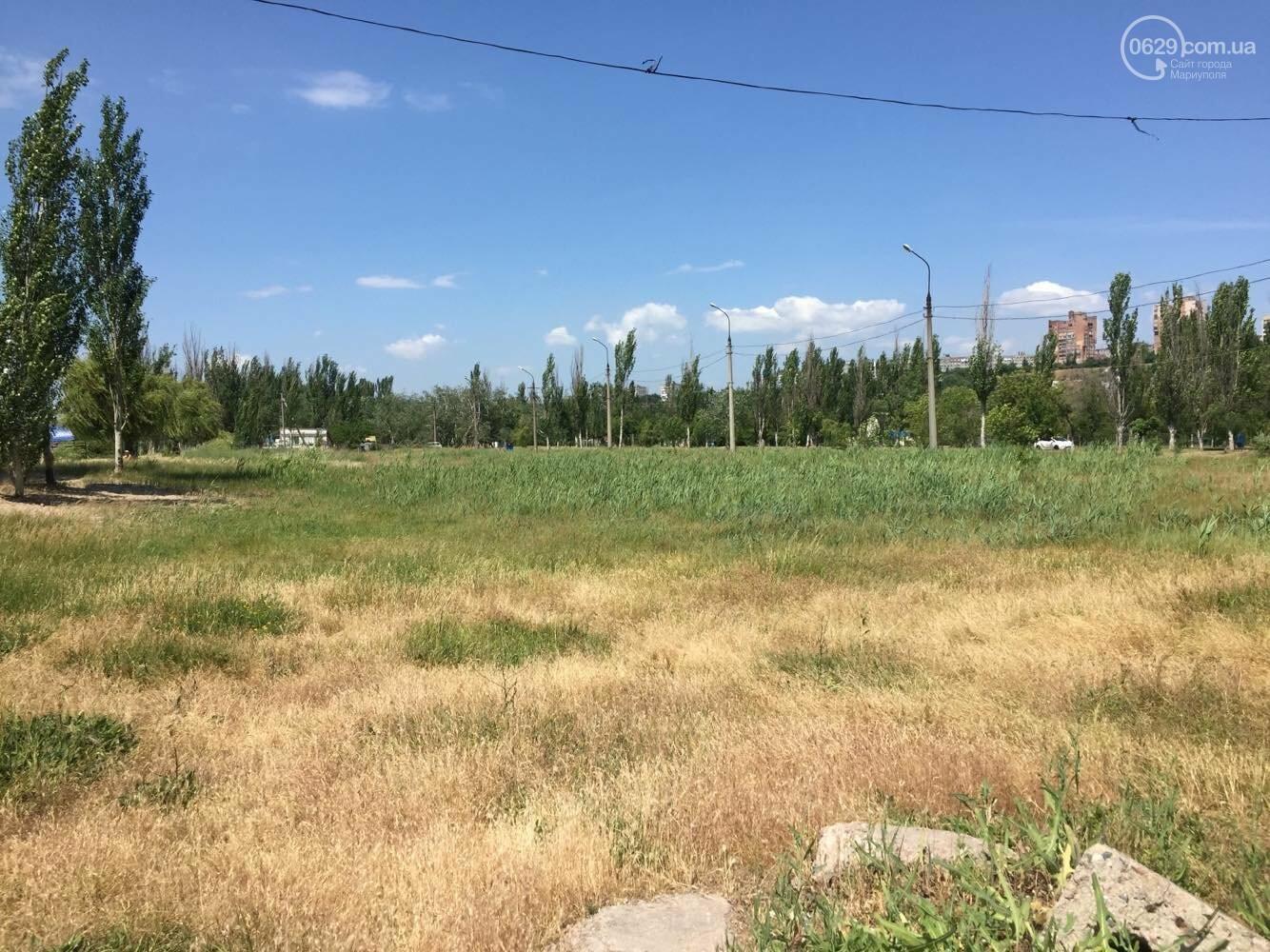 Реконструировать левобережную зону отдыха в  Мариуполе отдали известному поставщику саженцев, - ФОТО , фото-3