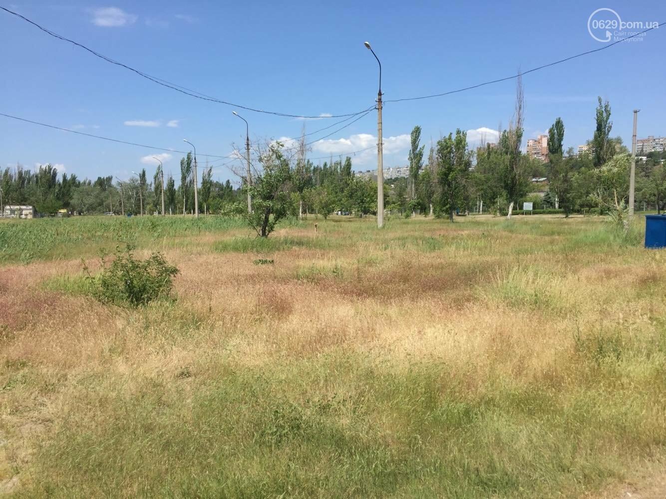 Реконструировать левобережную зону отдыха в  Мариуполе отдали известному поставщику саженцев, - ФОТО , фото-1