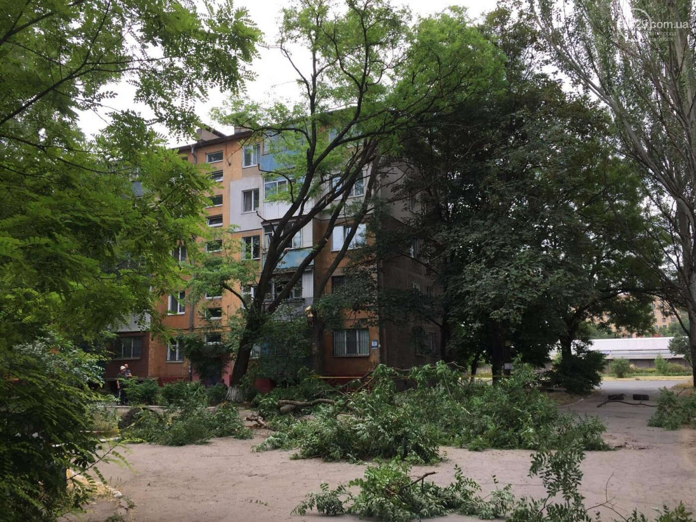 На пр. Строителей с самого утра сносили деревья, -ФОТО, ВИДЕО, фото-5