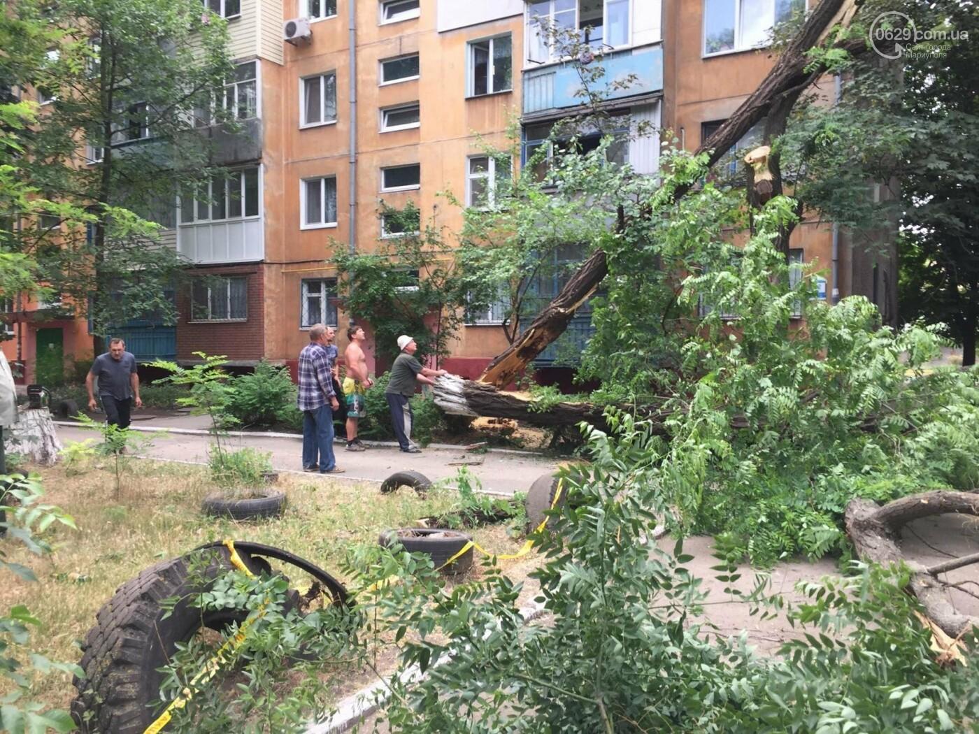 На пр. Строителей с самого утра сносили деревья, -ФОТО, ВИДЕО, фото-4