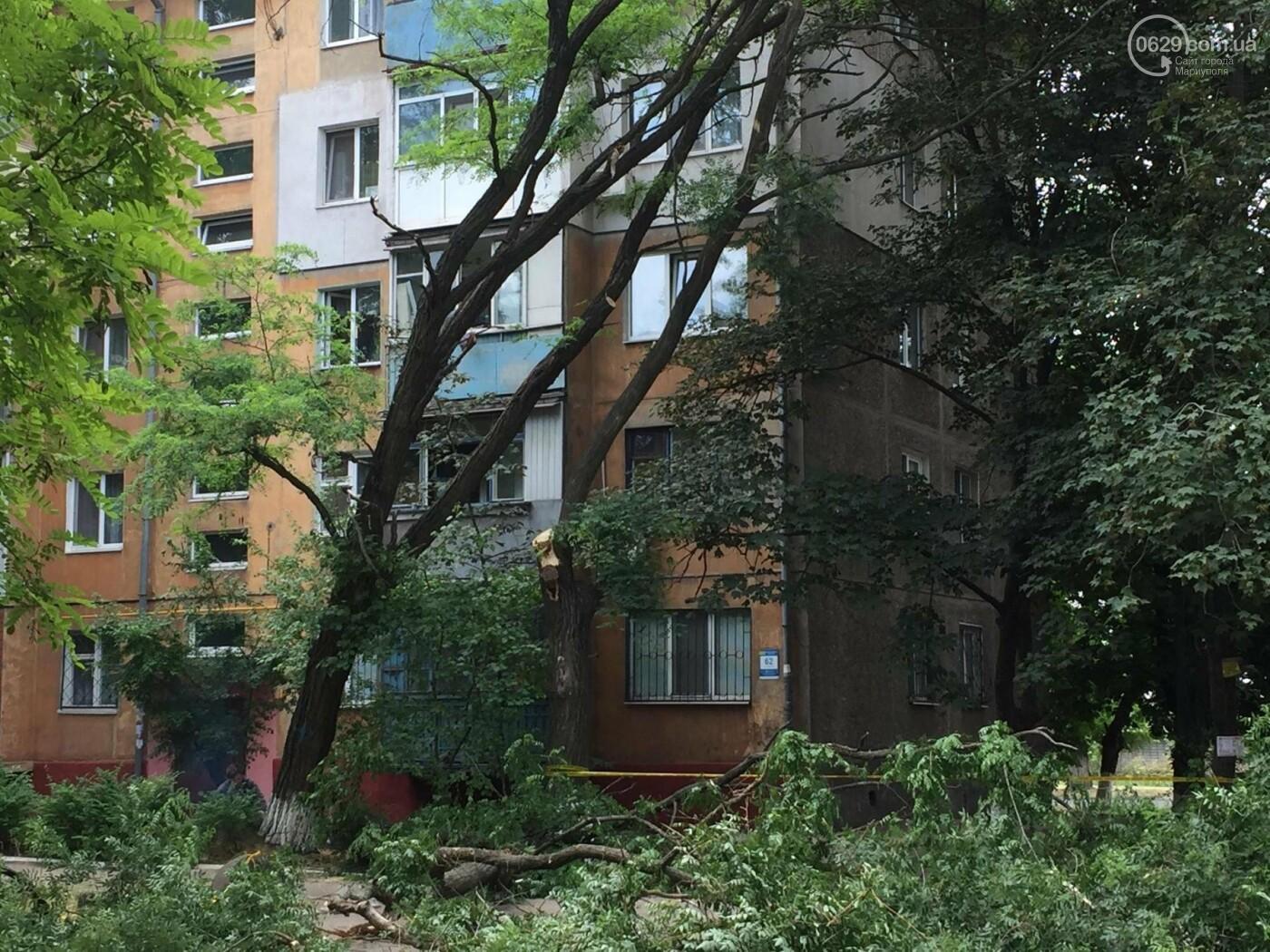 На пр. Строителей с самого утра сносили деревья, -ФОТО, ВИДЕО, фото-3