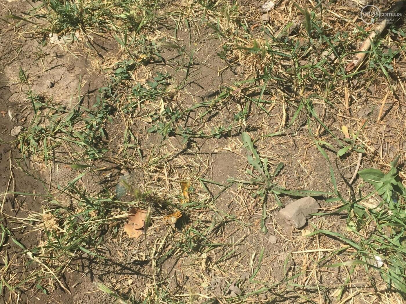В Мариуполе конца засухе не предвидится, фото-5