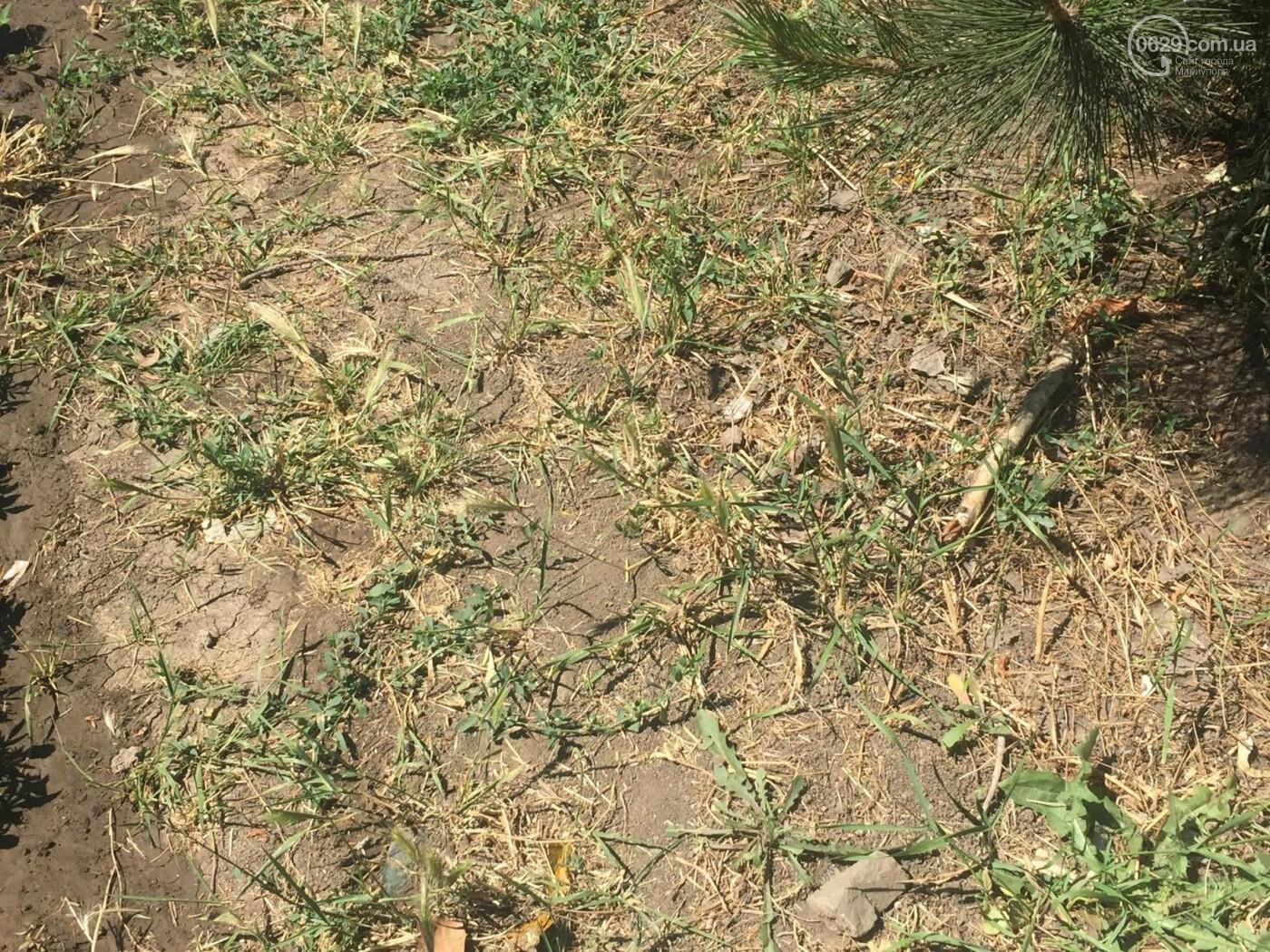 В Мариуполе конца засухе не предвидится, фото-6